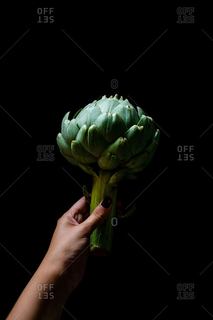 Unknown woman hand holding an artichoke in a black background