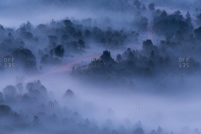 Fog over winter forest