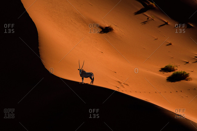 Breathtaking view of magnificent desert and antelope walking in it