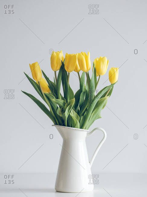 Fresh yellow tulips on green stems in jug vase on gray background