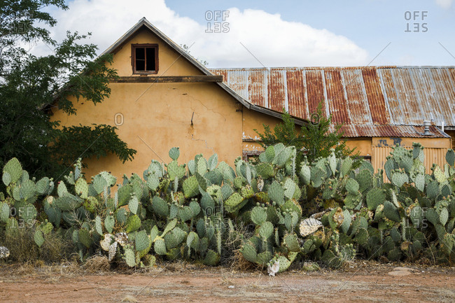 Cacti garden in front of rustic barn
