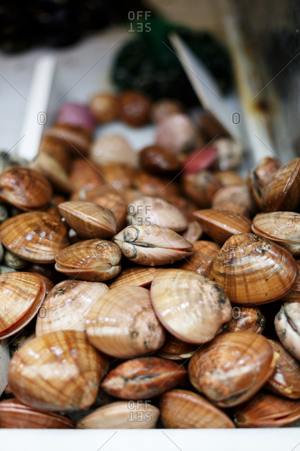 Clams for sale in a market