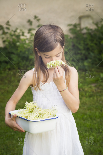 Girl with bowl of picked elderflowers smelling blossom