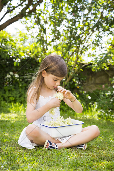 Little girl sitting on meadow in the garden with bowl of picked elderflowers