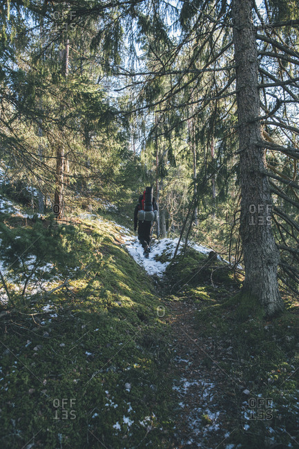 Sweden- Sodermanland- backpacker hiking in remote forest in winter