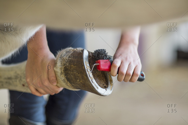 Close-up of woman cleaning hoof of a horse