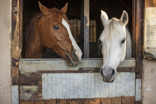 Two horses on a farm in stable