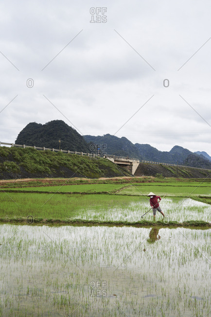 Phong Nha, Vietnam - January 30, 2018: Portrait of senior Vietnamese rice farmer working in field wearing hat.