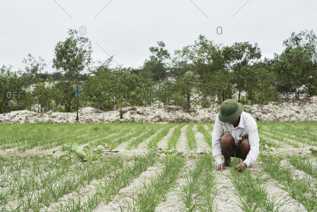 Dong Hoi, Vietnam - January 28,2018: Portrait of senior Vietnamese rice farmer working in field wearing green hat.