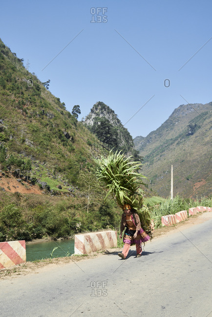 Ha Giang, Vietnam - February 15, 2018: Hmong indigenous woman carrying the harvest in the mountain dressing traditional costume.