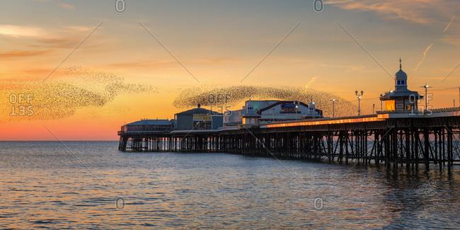 February 24, 2018: Starling murmuration, Blackpool Pier at sunset, Lancashire, England, United Kingdom, Europe