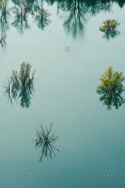 Trees in the Doberdo lake in Gorizia district, Friuli Venezia Giulia, Italy, Europe