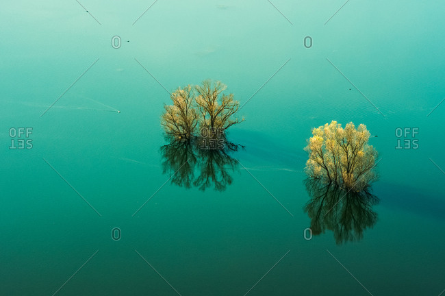 Trees in the Doberdo lake in Gorizia district, Friuli Venezia Giulia, Italy, Europe