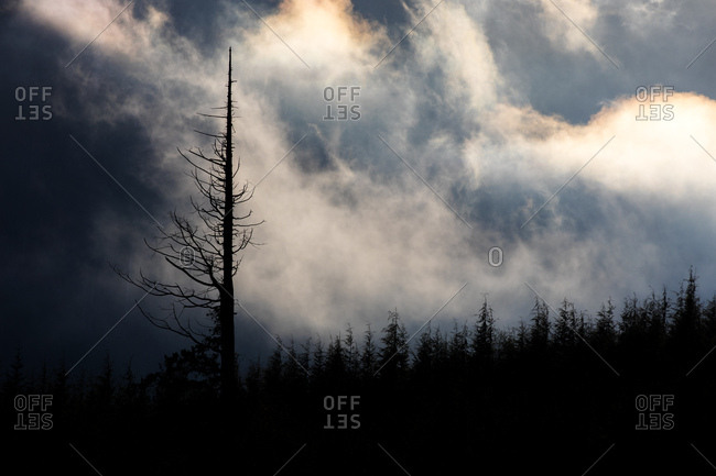Silhouette of tall snag in forest against cloudy sky