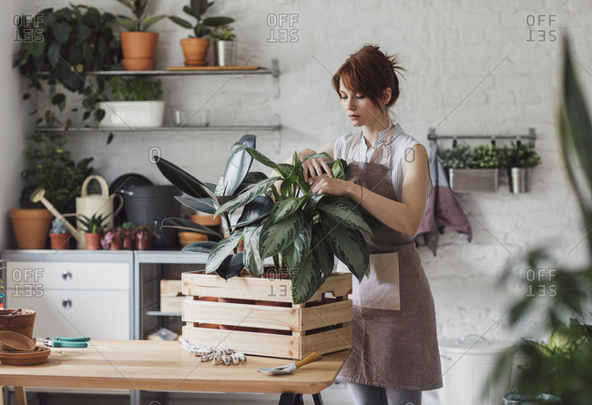 Beautiful redheaded woman florist examining plant in her home workshop