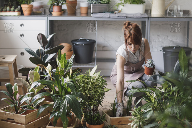 Pretty woman with apron arranging plants in pots at her workshop