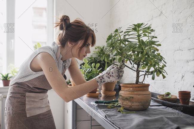 Female florist wearing apron and gloves and trimming plant