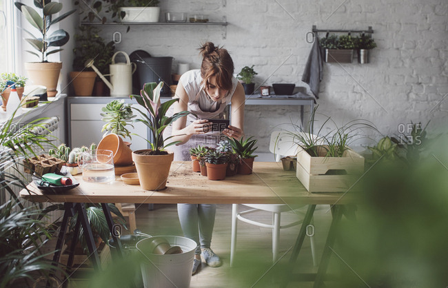 Woman gardener taking photo of her plants using cell phone and standing at her workshop