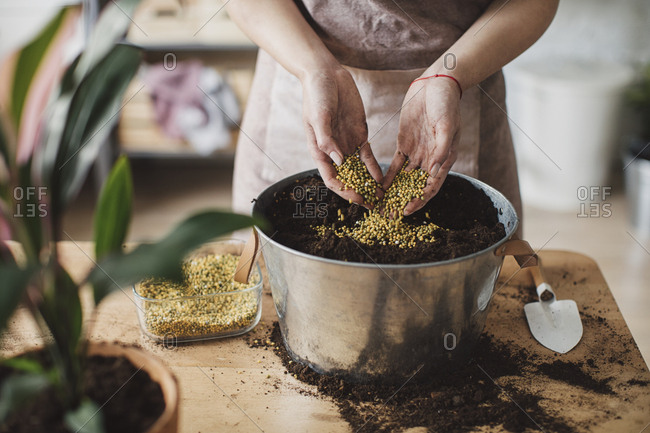 Hands of unrecognisable woman gardener putting seeds in soil for planting