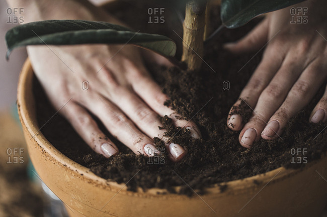 Hands of unrecognisable woman florist putting soil in pot for planting