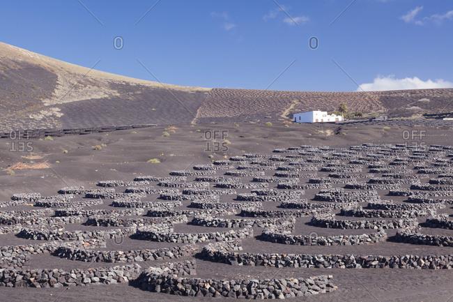 Wine-growing area La Geria, Lanzarote, Canary islands, Spain
