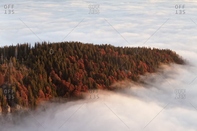 Sea of fog at the Feldberg at sunrise, Black Forest, Baden-Wurttemberg, Germany