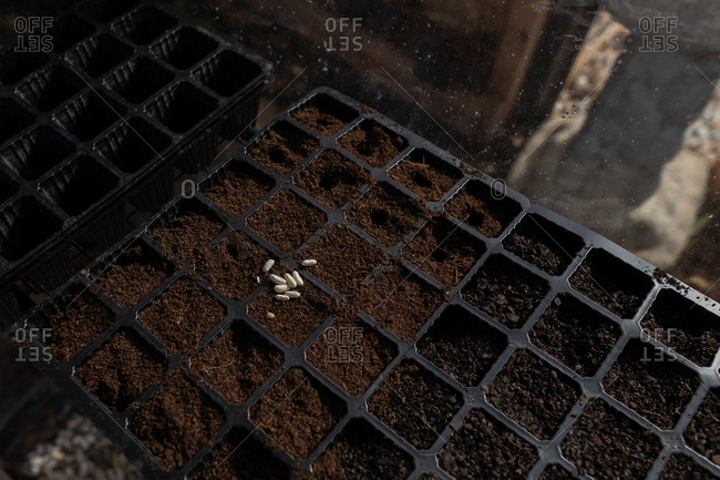 Seeds on top of soil in a planting container