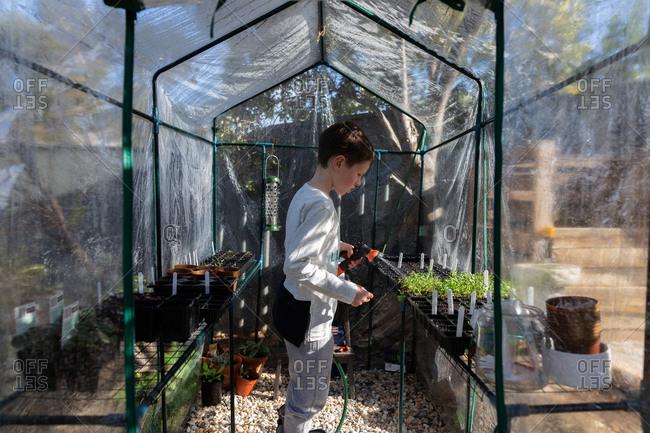 Little boy watering plants in a greenhouse