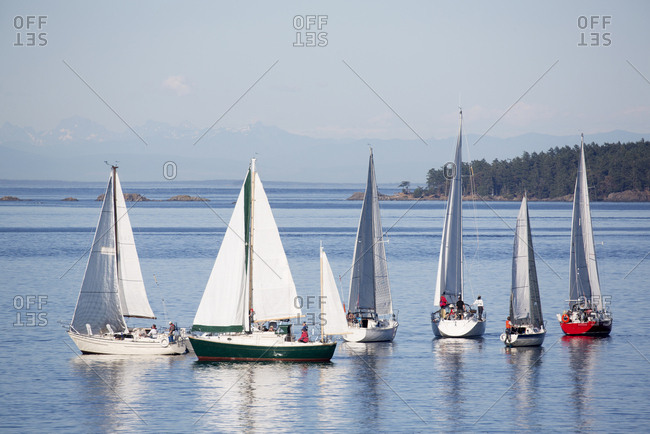 Sailboats sailing off the coast of Vancouver Island near Victoria, British Columbia