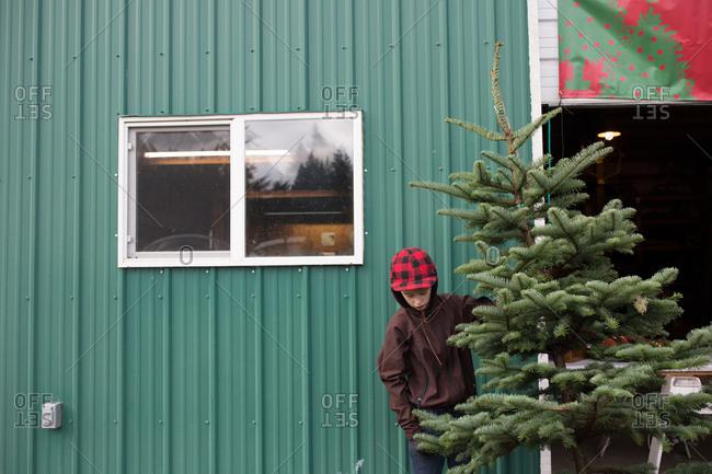 Boy holding freshly cut Christmas tree