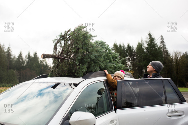Father and child securing freshly cut Christmas tree on top of car