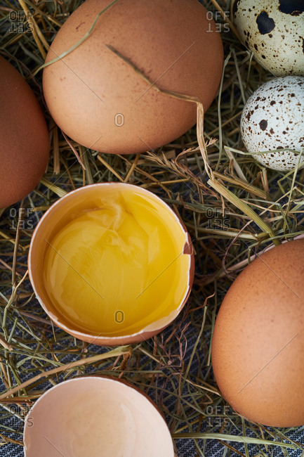 Yolk of cracked brown egg beside speckled eggs on straw