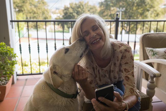 Pet dog kissing a happy senior woman at home