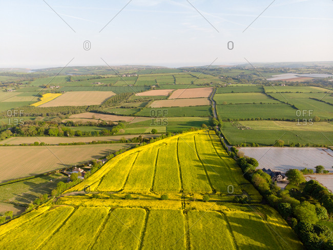 Beautiful crops field on a sunny day