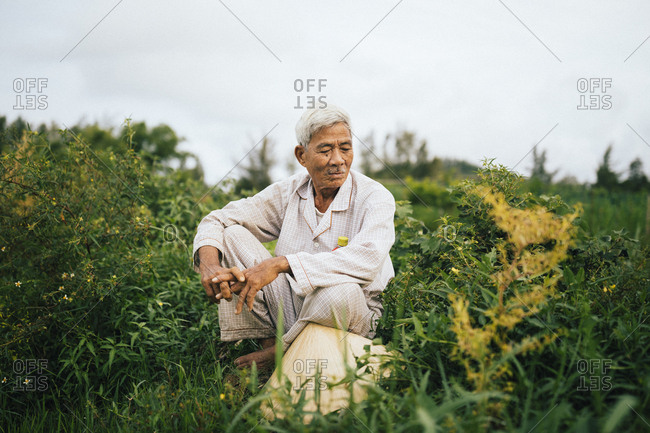 My Lai, Vietnam - October 2, 2017: A rice farmer in his fields where US helicopters and soldiers landed on March 16, 1968