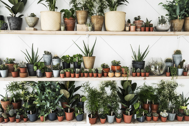 Large selection of plants in flowerpots on shelves in a plant shop