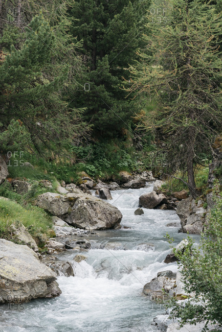 Scenic creek flowing through forest in the Italian Alps