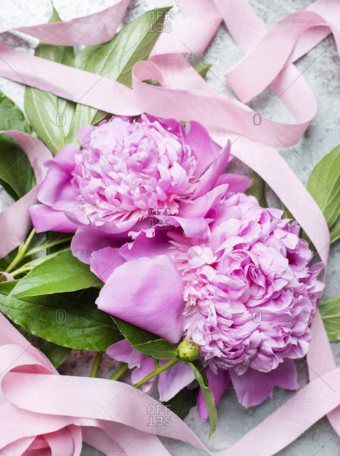 Close up of peonies with pink ribbon