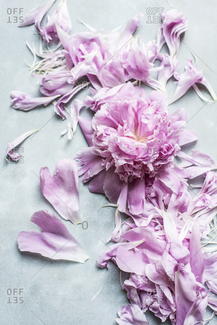 Fresh peony petals
