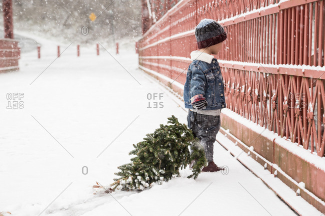 Boy With Freshly Cut Christmas Tree Standing By Fence