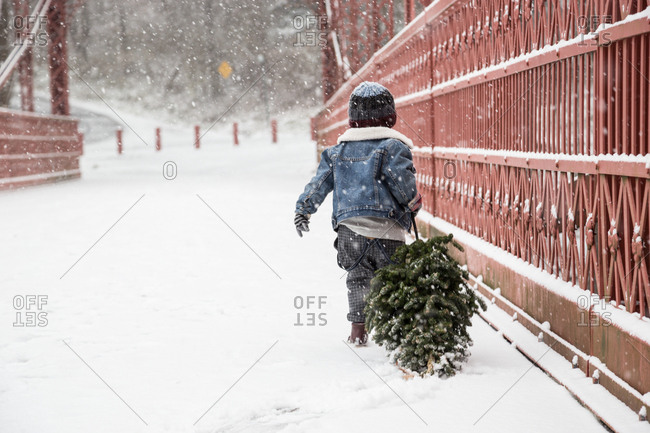 Boy With Freshly Cut Christmas Tree Walking By Fence