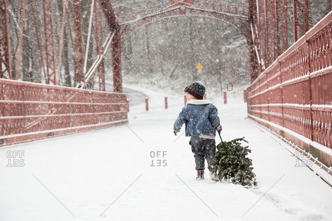 Boy With Freshly Cut Christmas Tree Walking In Snow