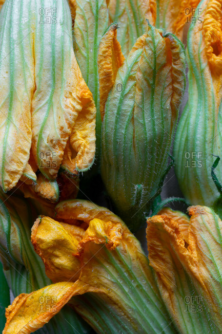 Close-up of squash blossoms
