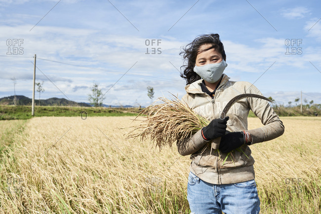 Central Highlands, Vietnam - January 10, 2018: Vietnamese youngster worker standing looking at camera with rice harvest and cutting blade