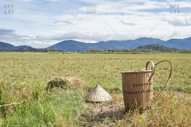 Rice field panorama with basket hat and harvest on the ground, Central Highlands, Vietnam