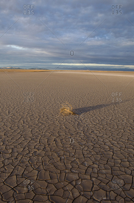Pulverized Colorado River silt and tumbleweed in the delta.