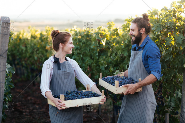 Couple holding crates with grape in vineyard and looking happy