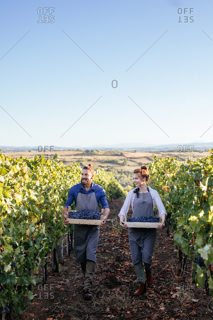 Couple carrying crates with grape in vineyard and looking happy