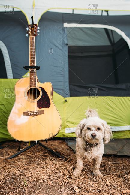 Dog standing next to acoustic guitar on stand outside of camping tent
