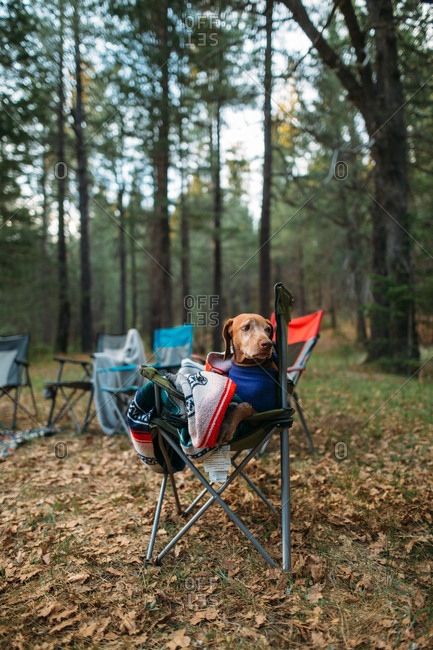 Dog wrapped in blanket sitting in camping chair